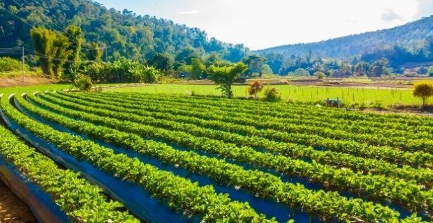 Les pesticides dans l'agriculture modernes : 10 choses à savoir